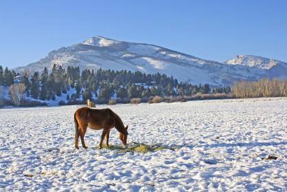 Snowy Horseman