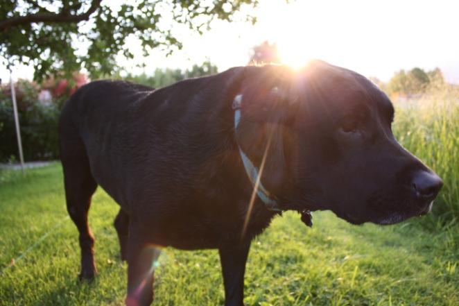 Pete the Good Dog